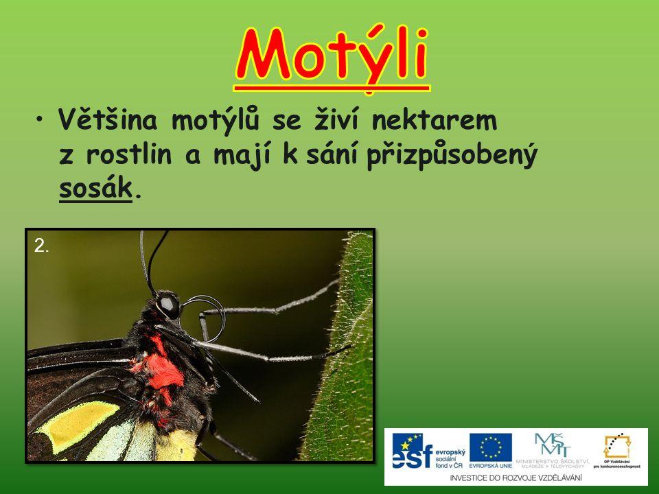 Motýli Většina motýlů se živí nektarem