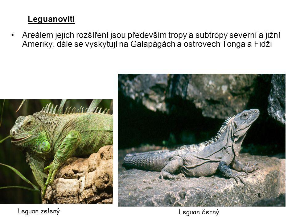 Leguanovití