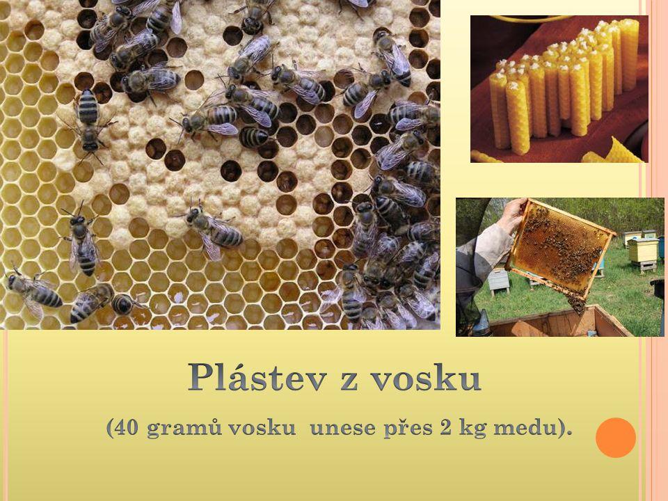 Plástev z vosku (40 gramů vosku unese přes 2 kg medu).