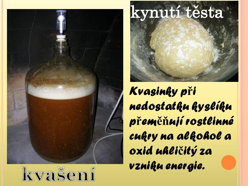 kynutí těsta Kvasinky při nedostatku kyslíku přeměňují rostlinné cukry na alkohol a oxid uhličitý za vzniku energie.