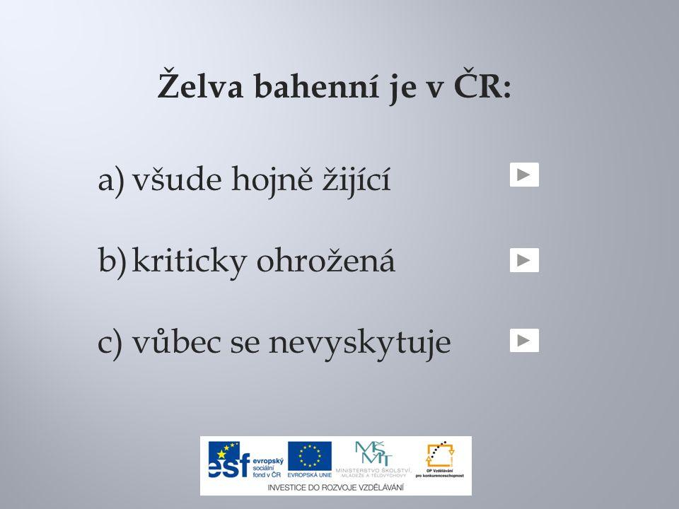 Želva bahenní je v ČR: všude hojně žijící kriticky ohrožená vůbec se nevyskytuje