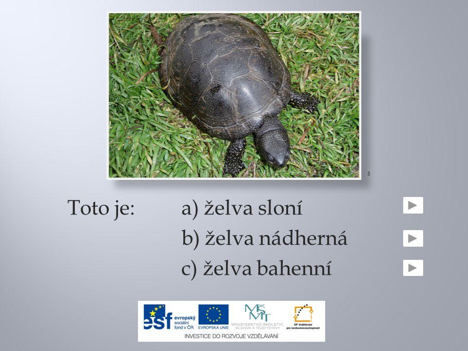 8 Toto je: a) želva sloní b) želva nádherná c) želva bahenní