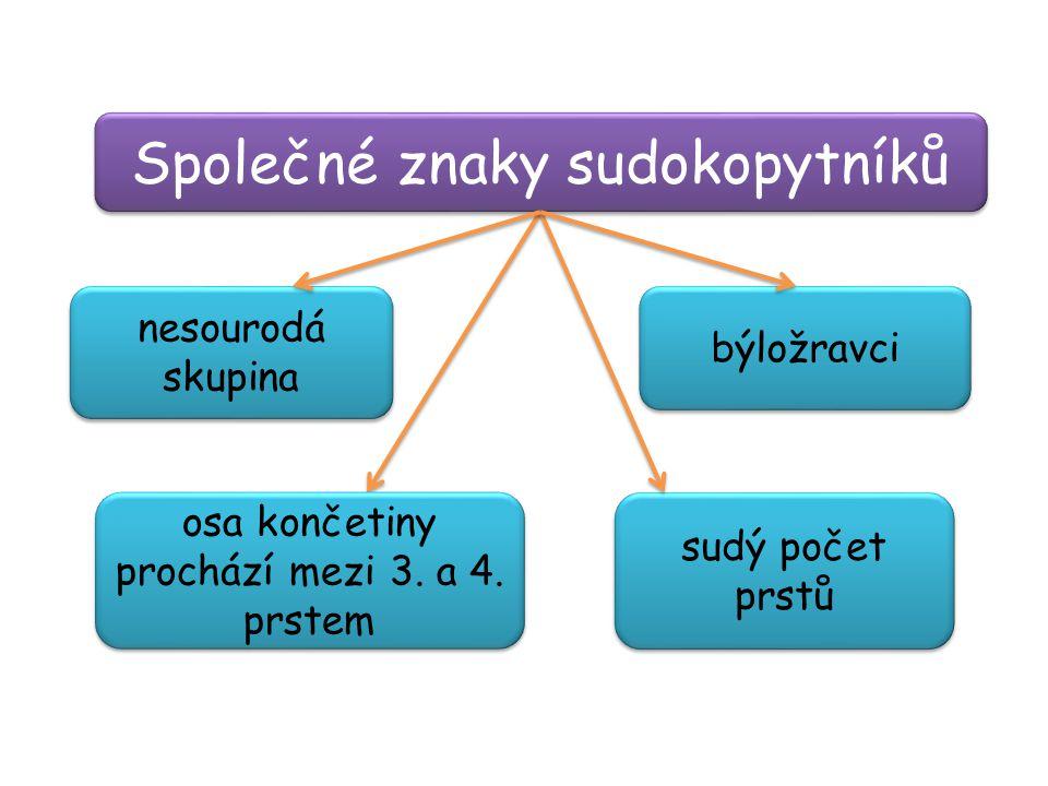 Společné znaky sudokopytníků