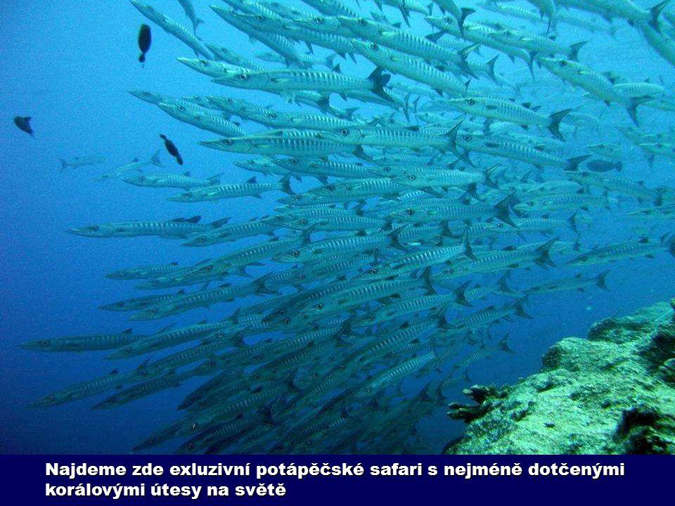 Najdeme zde exluzivní potápěčské safari s nejméně dotčenými korálovými útesy na světě