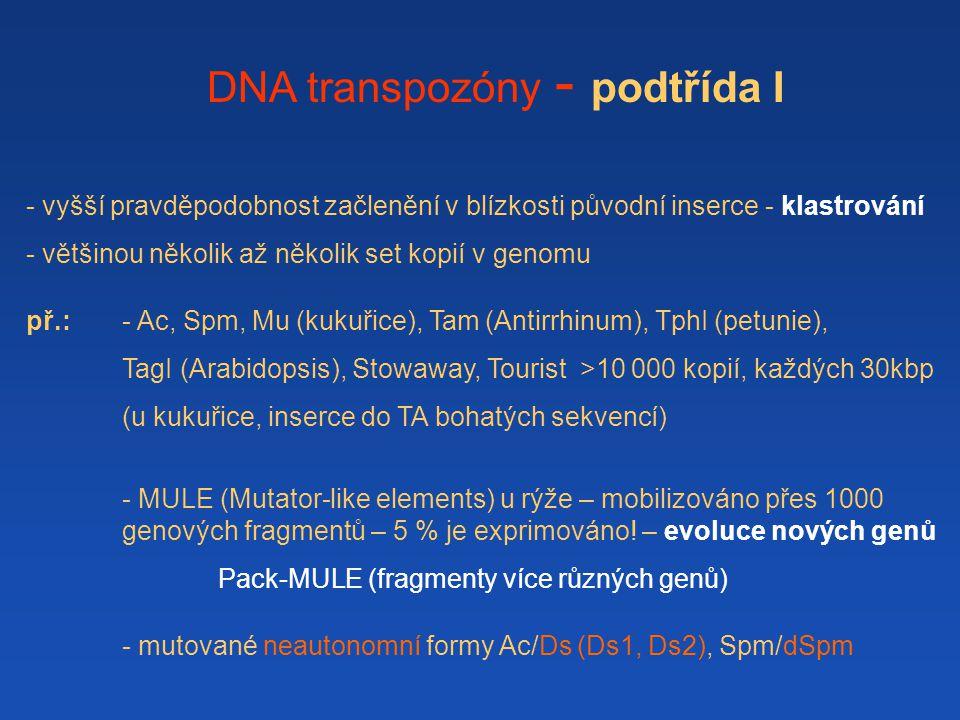 DNA transpozóny - podtřída I