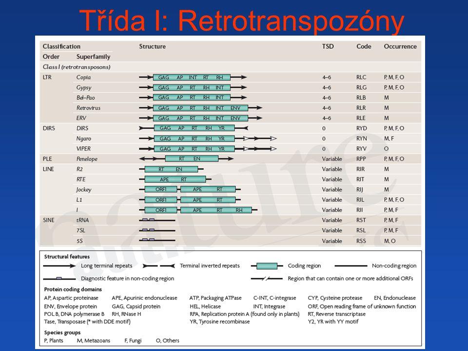 Třída I: Retrotranspozóny