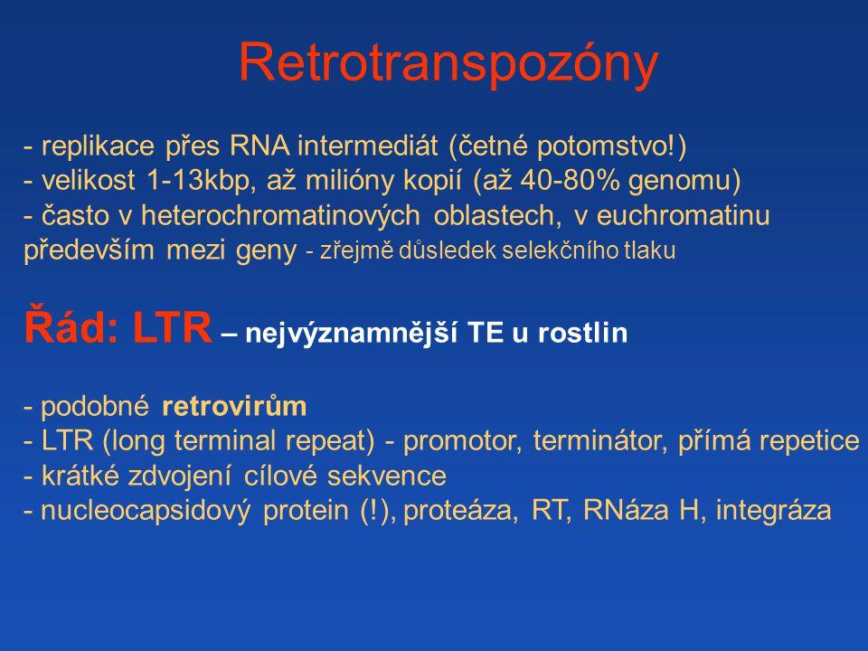 Retrotranspozóny Řád: LTR – nejvýznamnější TE u rostlin