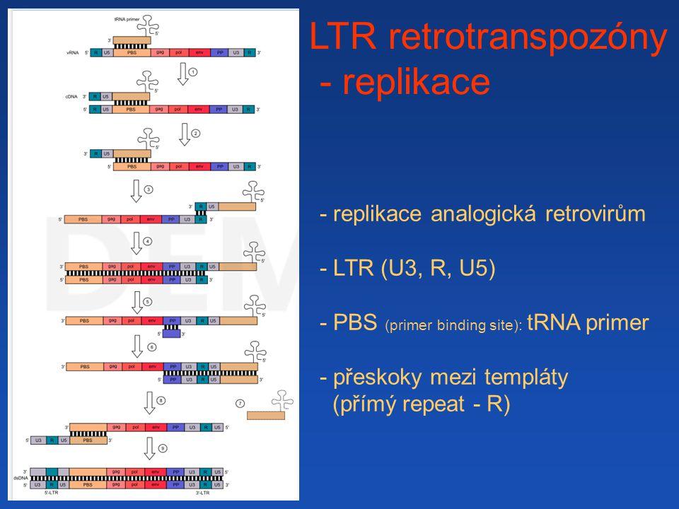 LTR retrotranspozóny - replikace - replikace analogická retrovirům
