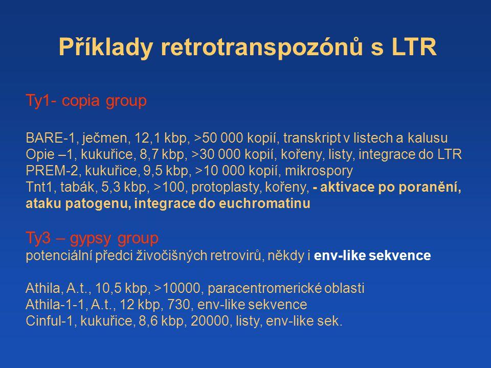 Příklady retrotranspozónů s LTR