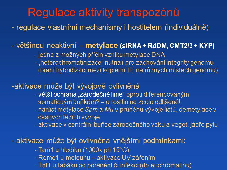 Regulace aktivity transpozónů