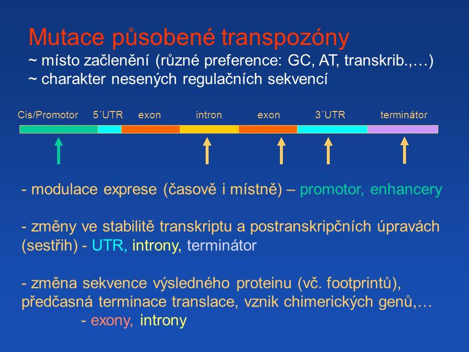 Mutace působené transpozóny