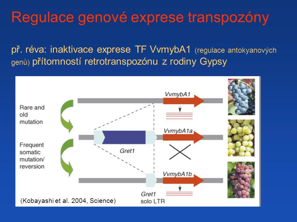 Regulace genové exprese transpozóny