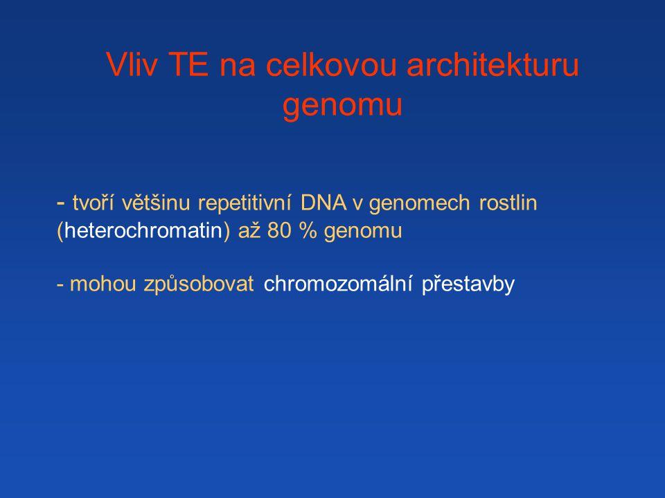 Vliv TE na celkovou architekturu genomu