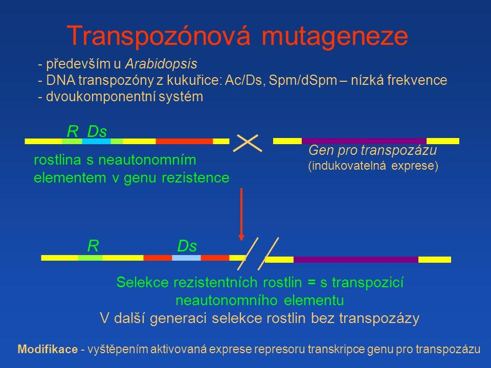 Transpozónová mutageneze