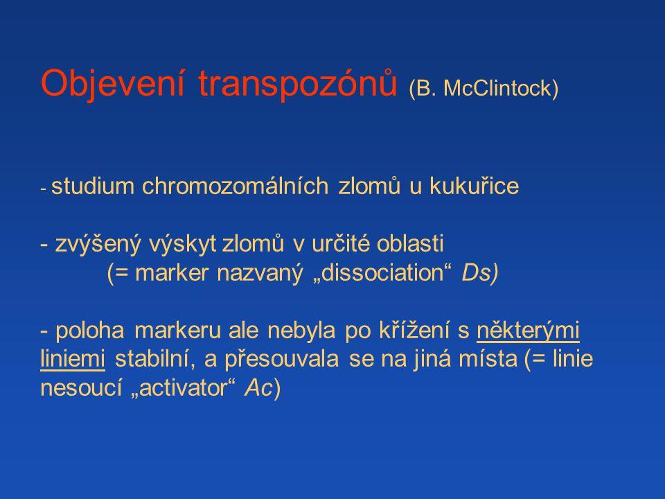 Objevení transpozónů (B. McClintock)