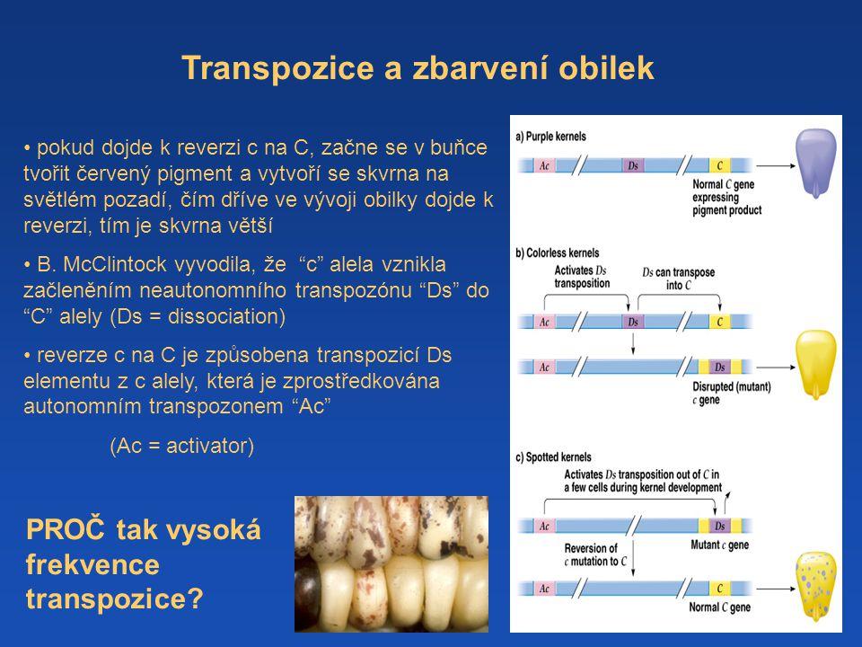 Transpozice a zbarvení obilek