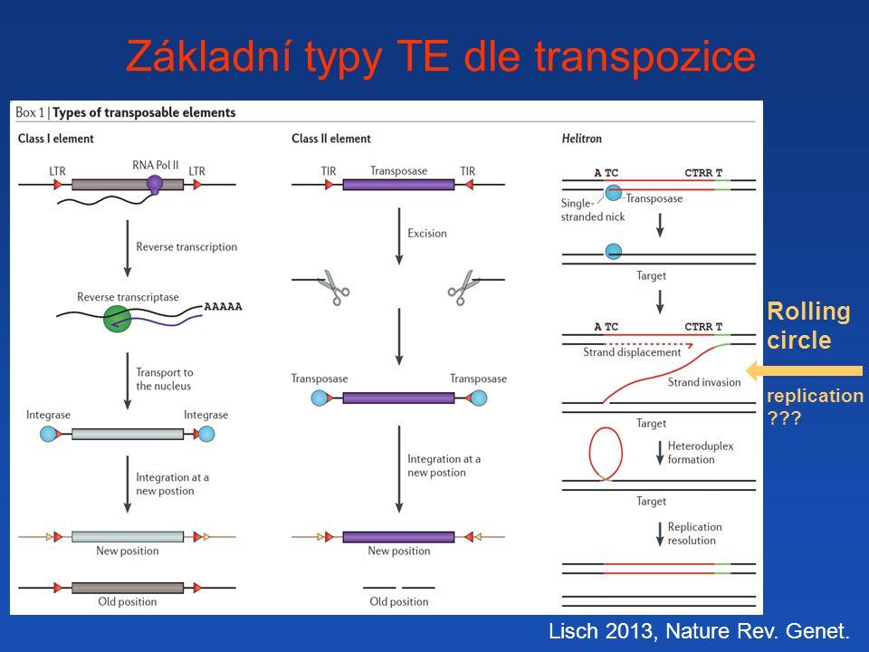 Základní typy TE dle transpozice