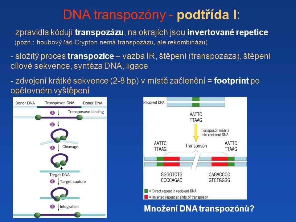 DNA transpozóny - podtřída I: