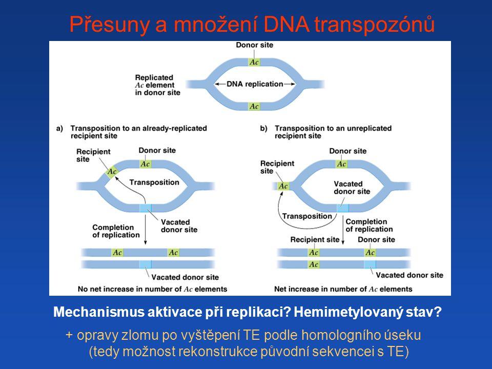 Přesuny a množení DNA transpozónů