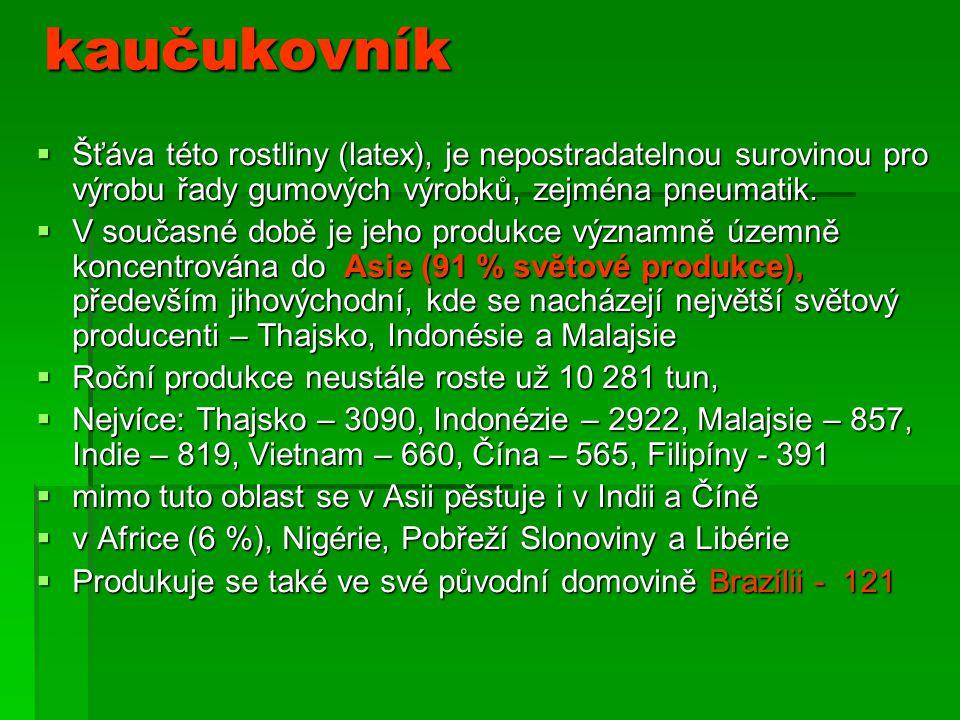 kaučukovník Šťáva této rostliny (latex), je nepostradatelnou surovinou pro výrobu řady gumových výrobků, zejména pneumatik.