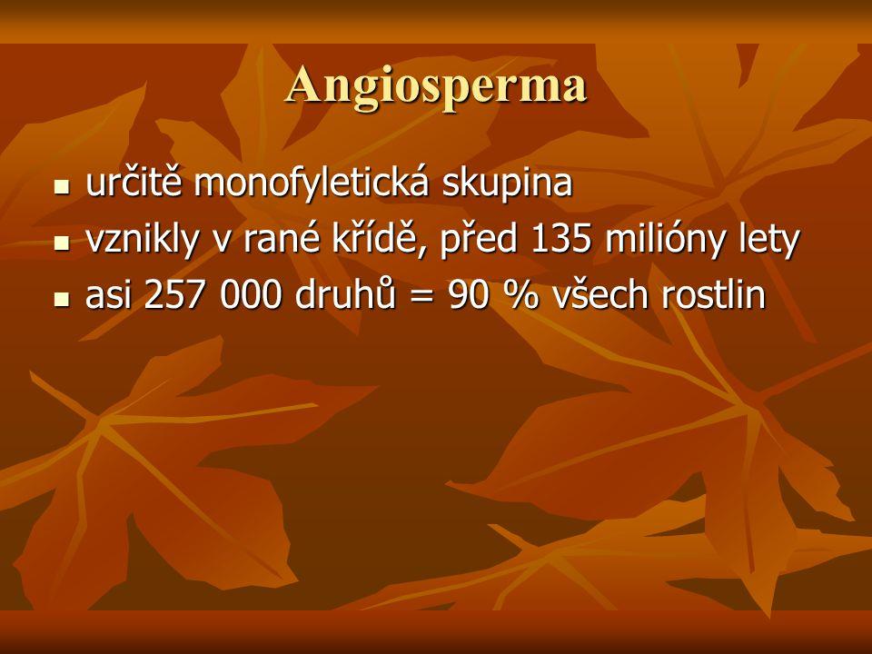 Angiosperma určitě monofyletická skupina