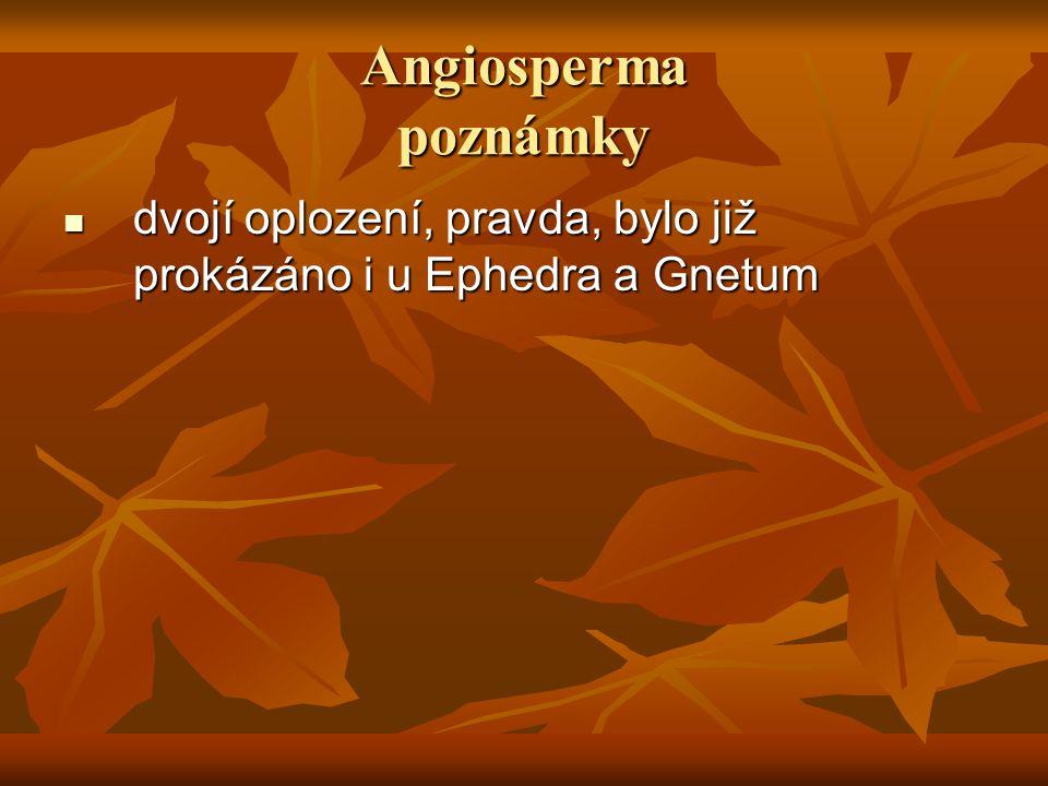 Angiosperma poznámky dvojí oplození, pravda, bylo již prokázáno i u Ephedra a Gnetum