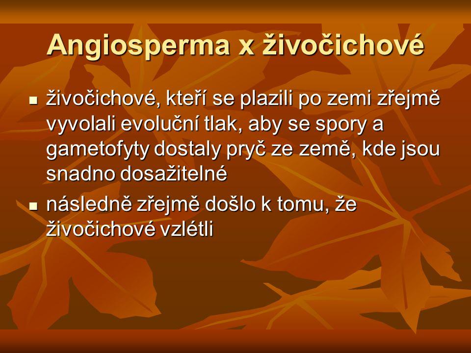 Angiosperma x živočichové