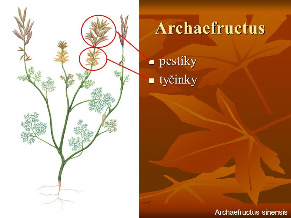 Archaefructus pestíky tyčinky Archaefructus sinensis