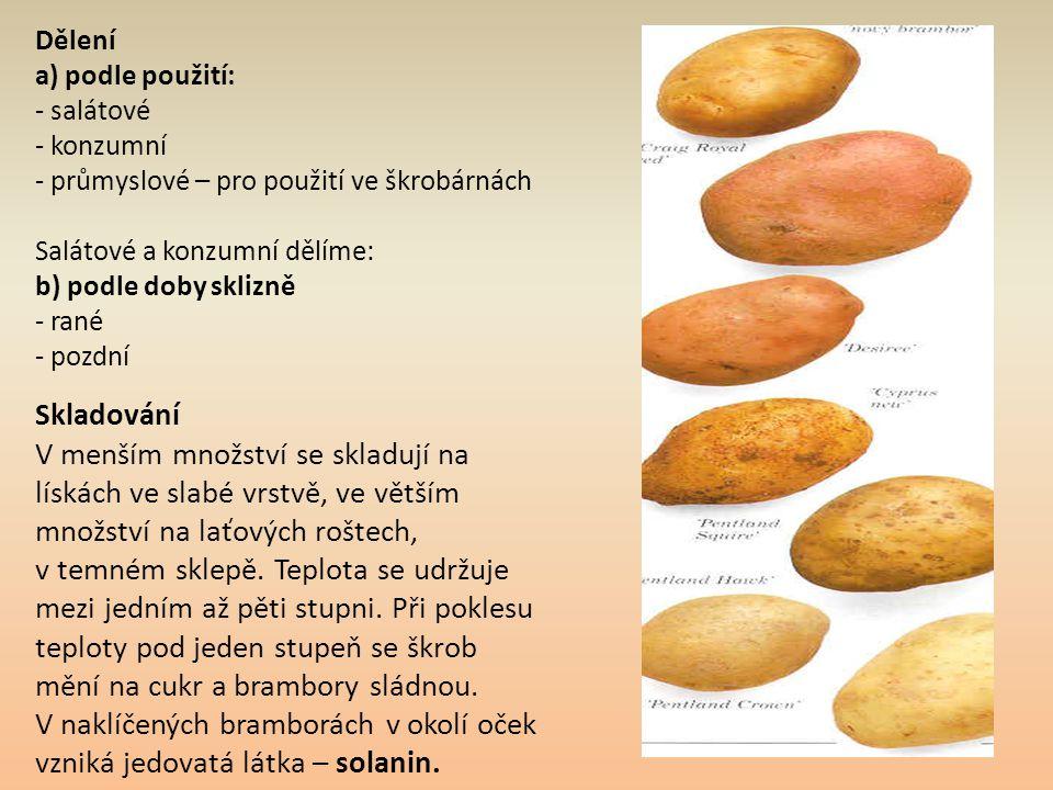 V naklíčených bramborách v okolí oček vzniká jedovatá látka – solanin.