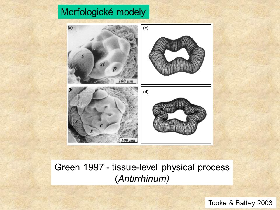 Green tissue-level physical process