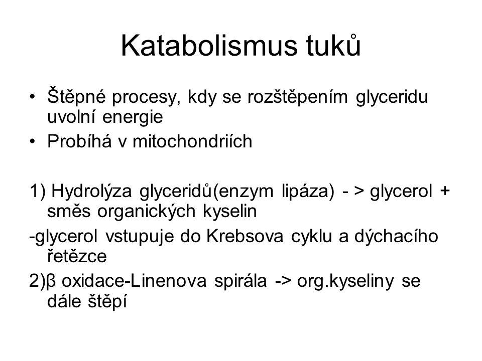Katabolismus tuků Štěpné procesy, kdy se rozštěpením glyceridu uvolní energie. Probíhá v mitochondriích.