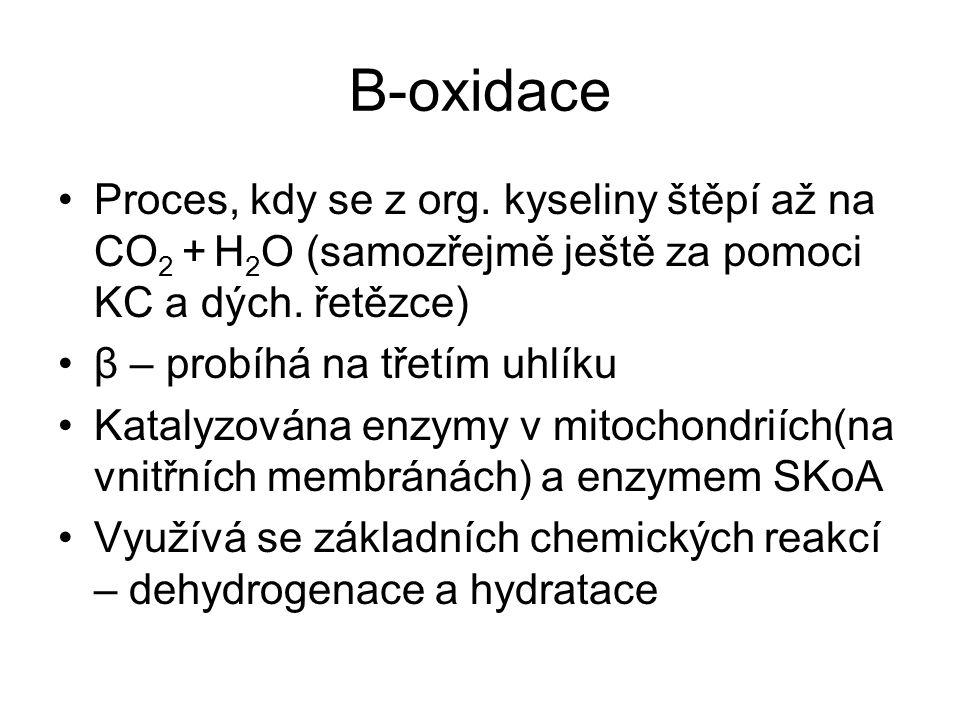 Β-oxidace Proces, kdy se z org. kyseliny štěpí až na CO2 + H2O (samozřejmě ještě za pomoci KC a dých. řetězce)