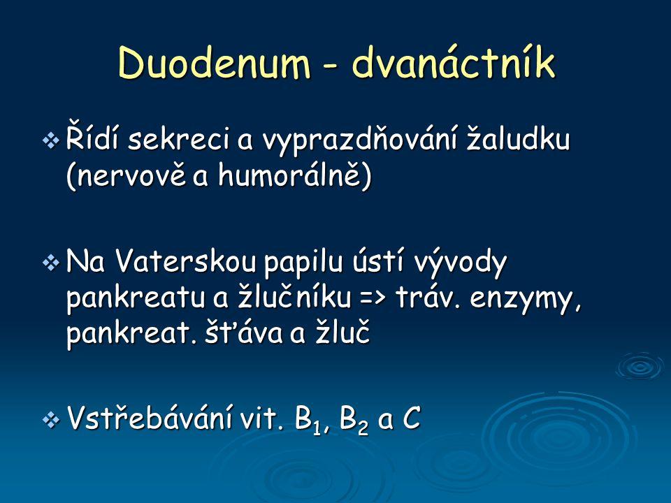 Duodenum - dvanáctník Řídí sekreci a vyprazdňování žaludku (nervově a humorálně)