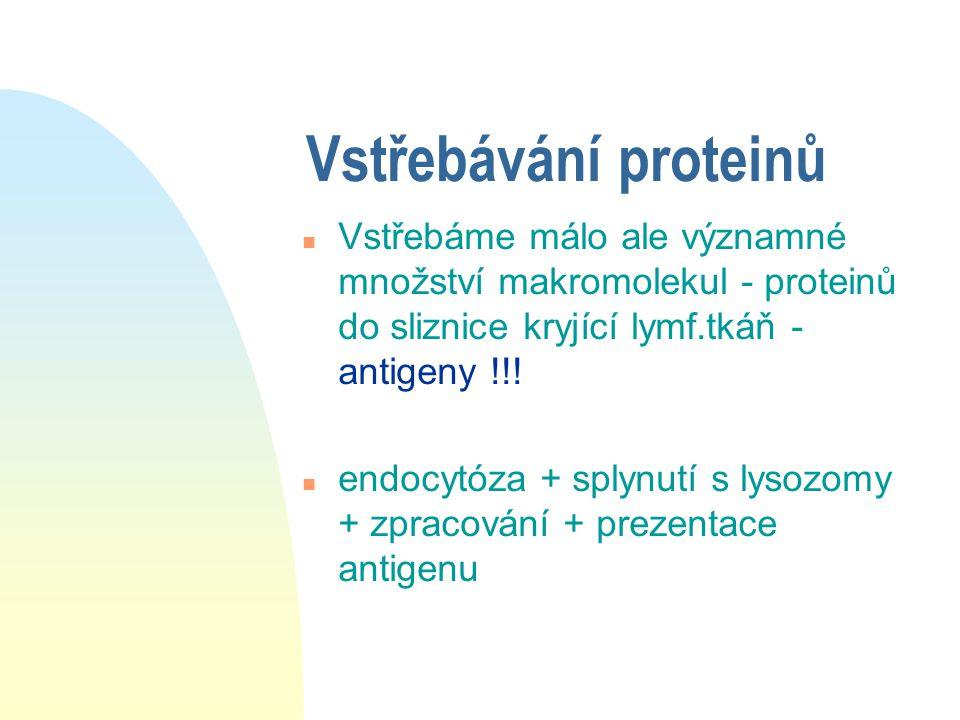 Vstřebávání proteinů Vstřebáme málo ale významné množství makromolekul - proteinů do sliznice kryjící lymf.tkáň - antigeny !!!