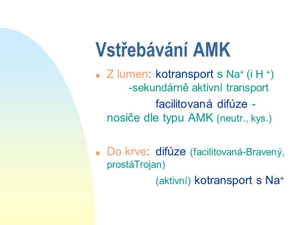 Vstřebávání AMK Z lumen: kotransport s Na+ (i H +) -sekundárně aktivní transport. facilitovaná difúze - nosiče dle typu AMK (neutr., kys.)