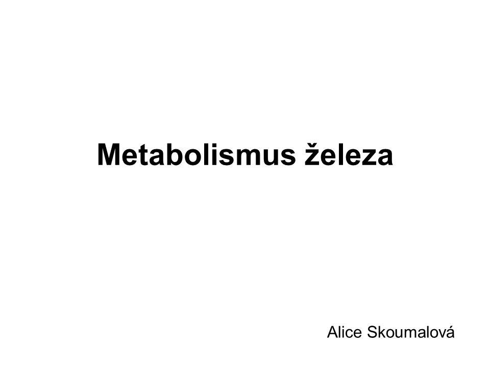 Metabolismus železa Alice Skoumalová