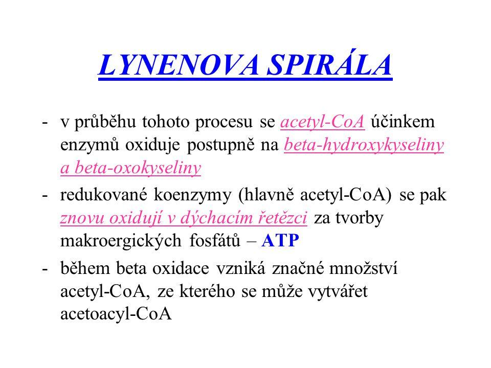 LYNENOVA SPIRÁLA v průběhu tohoto procesu se acetyl-CoA účinkem enzymů oxiduje postupně na beta-hydroxykyseliny a beta-oxokyseliny.