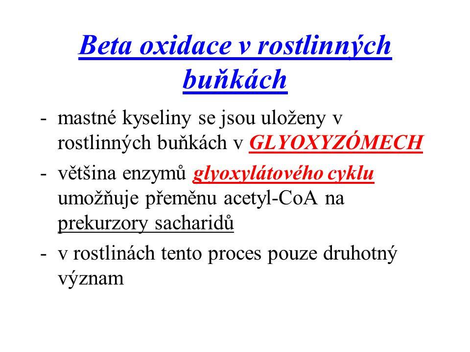 Beta oxidace v rostlinných buňkách