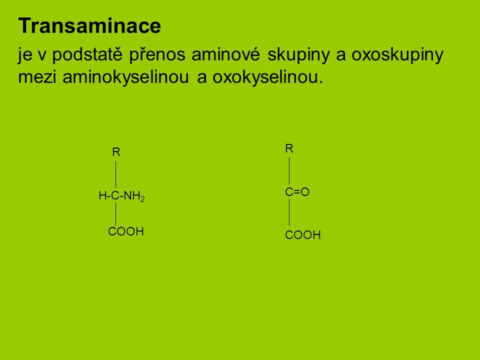 Transaminace je v podstatě přenos aminové skupiny a oxoskupiny mezi aminokyselinou a oxokyselinou. R.
