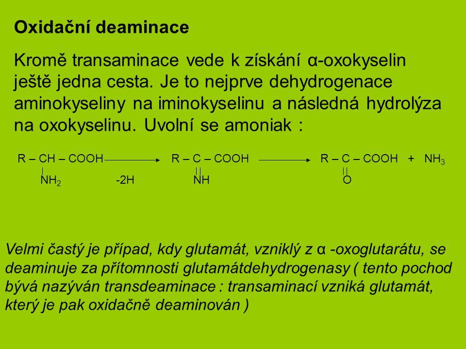 Oxidační deaminace