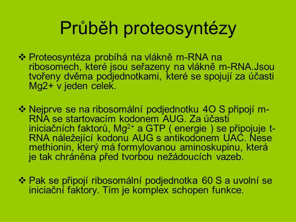 Průběh proteosyntézy