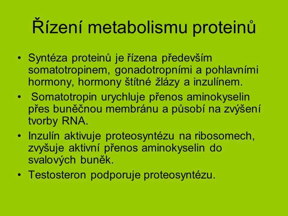 Řízení metabolismu proteinů