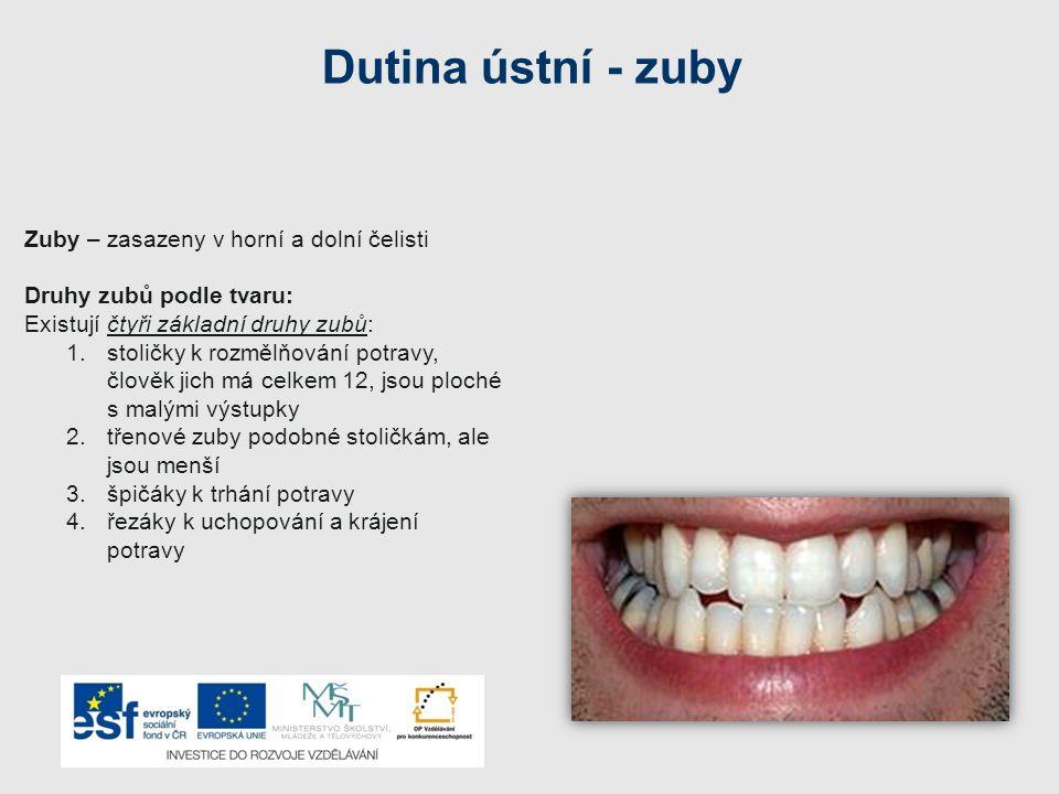 Dutina ústní - zuby Zuby – zasazeny v horní a dolní čelisti
