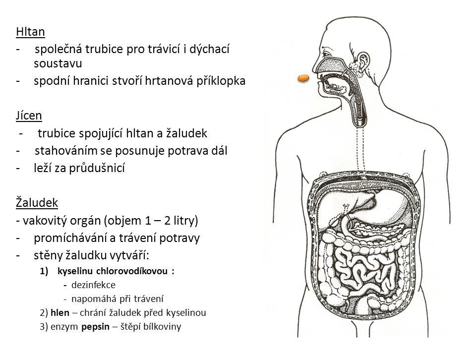 - společná trubice pro trávicí i dýchací soustavu