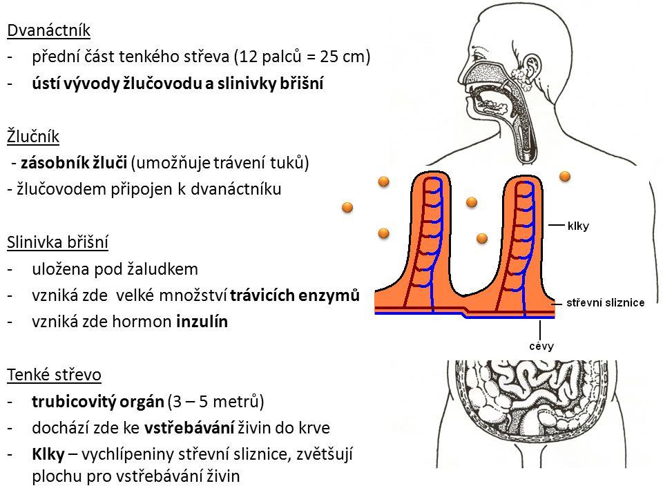 Dvanáctník přední část tenkého střeva (12 palců = 25 cm) ústí vývody žlučovodu a slinivky břišní. Žlučník.