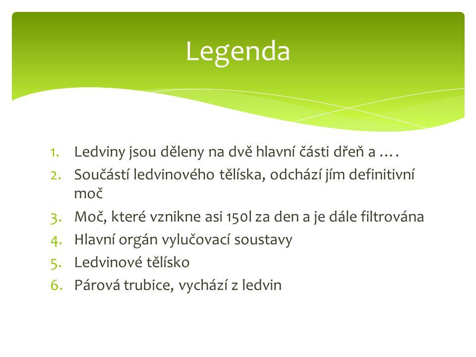 Legenda Ledviny jsou děleny na dvě hlavní části dřeň a ….