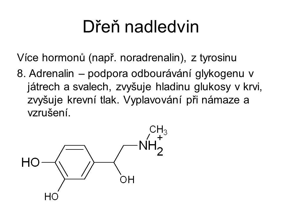 Dřeň nadledvin Více hormonů (např. noradrenalin), z tyrosinu