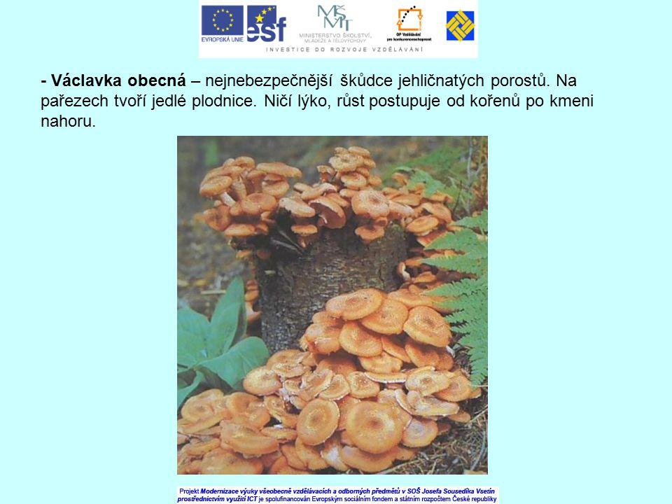- Václavka obecná – nejnebezpečnější škůdce jehličnatých porostů