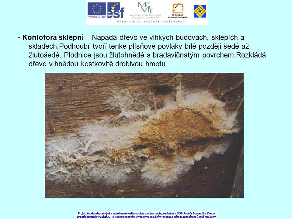 - Koniofora sklepní – Napadá dřevo ve vlhkých budovách, sklepích a skladech.Podhoubí tvoří tenké plísňové povlaky bílé později šedé až žlutošedé.