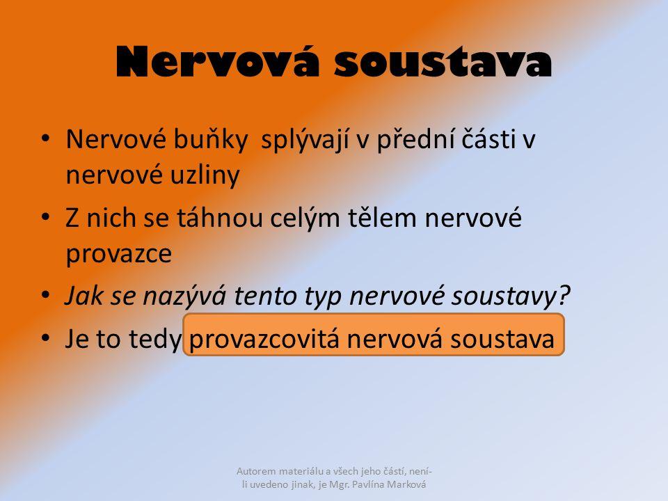 Nervová soustava Nervové buňky splývají v přední části v nervové uzliny. Z nich se táhnou celým tělem nervové provazce.